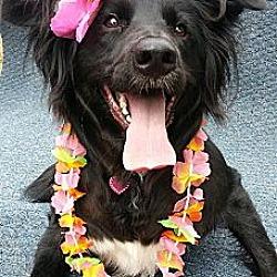 Photo 1 - Labrador Retriever/Golden Retriever Mix Dog for adoption in Fresno, California - Madison