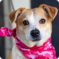 Adopt A Pet :: Lucky Girl - Baton Rouge, LA