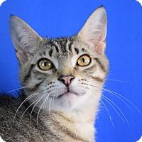 Adopt A Pet :: Pharoh - Carencro, LA