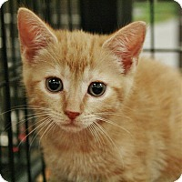 Adopt A Pet :: Mack - Fairfax Station, VA