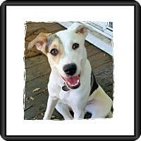 Adopt A Pet :: Aaron - Genoa City, WI