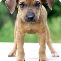 Adopt A Pet :: Rocket - Waldorf, MD