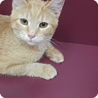 Adopt A Pet :: Scotcheroo - Muscatine, IA
