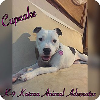 Pit Bull Terrier Mix Dog for adoption in Cheney, Kansas - Cupcake