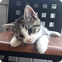 Adopt A Pet :: Ernie - Plantsville, CT