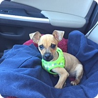 Adopt A Pet :: Peanut - Richmond, VA