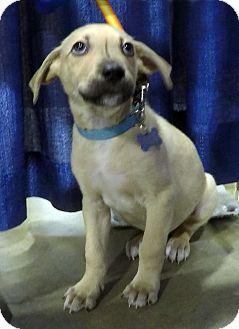 Shepherd (Unknown Type)/Terrier (Unknown Type, Medium) Mix Puppy for adoption in Detroit, Michigan - Dalton-Adopted!