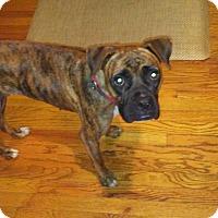 Adopt A Pet :: Wednesday - Austin, TX