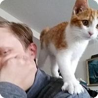 Adopt A Pet :: Freddy - Marietta, GA
