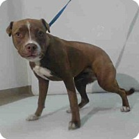 Adopt A Pet :: D.W. - Orlando, FL