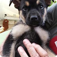 Adopt A Pet :: Greg - Royal Palm Beach, FL