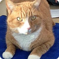 Adopt A Pet :: Barnaby - Gaithersburg, MD
