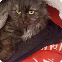 Adopt A Pet :: Delilah 170162 - Atlanta, GA