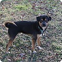 Adopt A Pet :: Chico - Homewood, AL