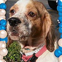 Adopt A Pet :: Nora - Sugarland, TX
