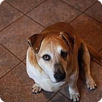 Adopt A Pet :: Sam - Russellville, KY