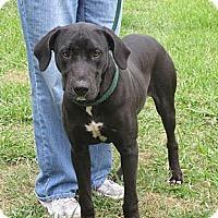 Adopt A Pet :: ABNER - Glastonbury, CT