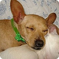 Adopt A Pet :: Katy - Seattle, WA