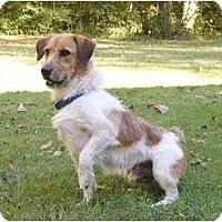 Adopt A Pet :: Benjamin - Mocksville, NC