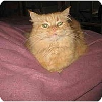 Adopt A Pet :: Hunny - Cincinnati, OH