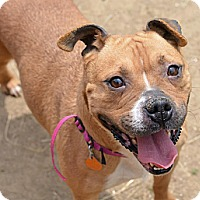 Adopt A Pet :: Azuri (foster care) - Philadelphia, PA