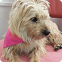 Adopt A Pet :: Toots - Freeport, NY