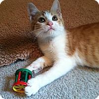 Adopt A Pet :: Sam - Monroe, GA