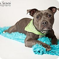 Adopt A Pet :: Grover - Los Angeles, CA