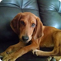 Adopt A Pet :: Starskey - Tampa, FL