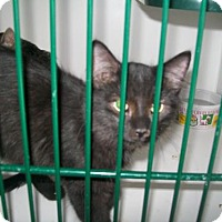 Adopt A Pet :: Eyore - Caistor Centre, ON