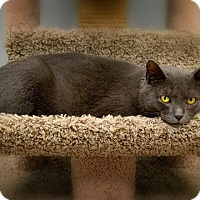 Adopt A Pet :: Smokey - Byron Center, MI