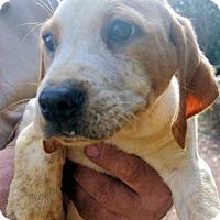 Adopt A Pet :: Wind Chill - Atlanta, GA