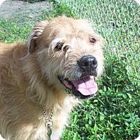 Adopt A Pet :: YASI - Odessa, FL