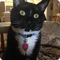Adopt A Pet :: Charlie-11601 - Richardson, TX