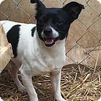 Adopt A Pet :: Ritz - Wallingford Area, CT