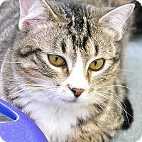 Adopt A Pet :: Penny - Buffalo, WY