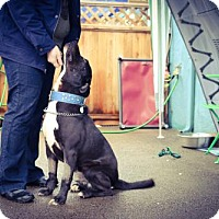 Adopt A Pet :: Tomson - Eugene, OR