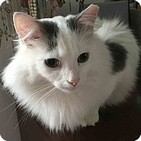 Adopt A Pet :: Luna - Gaithersburg, MD