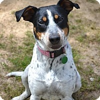 Adopt A Pet :: Freckles - Westport, CT
