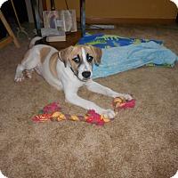 Adopt A Pet :: Casey - Plainfield, IL