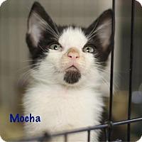 Adopt A Pet :: Mocha - Baton Rouge, LA