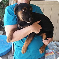 Adopt A Pet :: Pudge - Phoenix, AZ