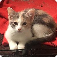 Adopt A Pet :: Dorthy - Philadelphia, PA