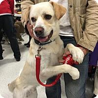 Adopt A Pet :: Diesel - Willingboro, NJ