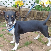 Adopt A Pet :: Hobart - West Chicago, IL