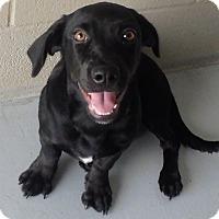 Basset Hound Mix Dog for adoption in Seguin, Texas - Bubbalicious