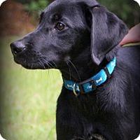Adopt A Pet :: Sid - Glastonbury, CT