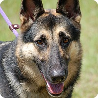 Adopt A Pet :: Trina - Preston, CT