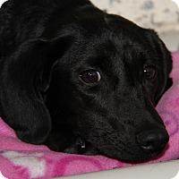 Adopt A Pet :: Jewels - Marietta, OH