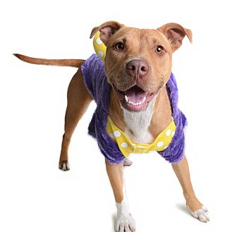Pit Bull Terrier Mix Dog for adoption in Wilmington, Delaware - Franny